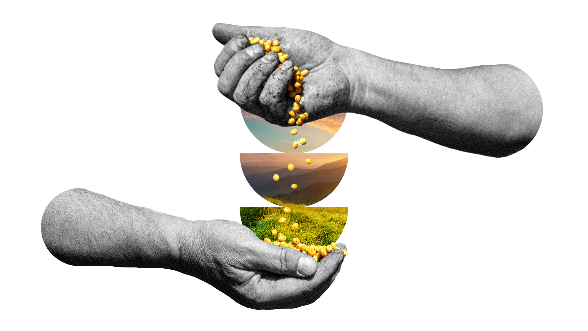 Artistic rendering of hands holding seeds