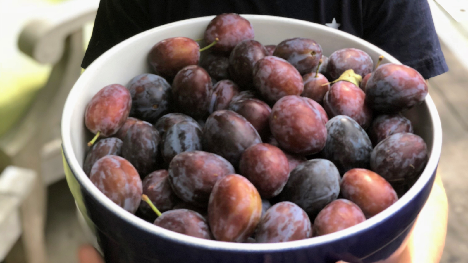 A bowl full of ripe plums