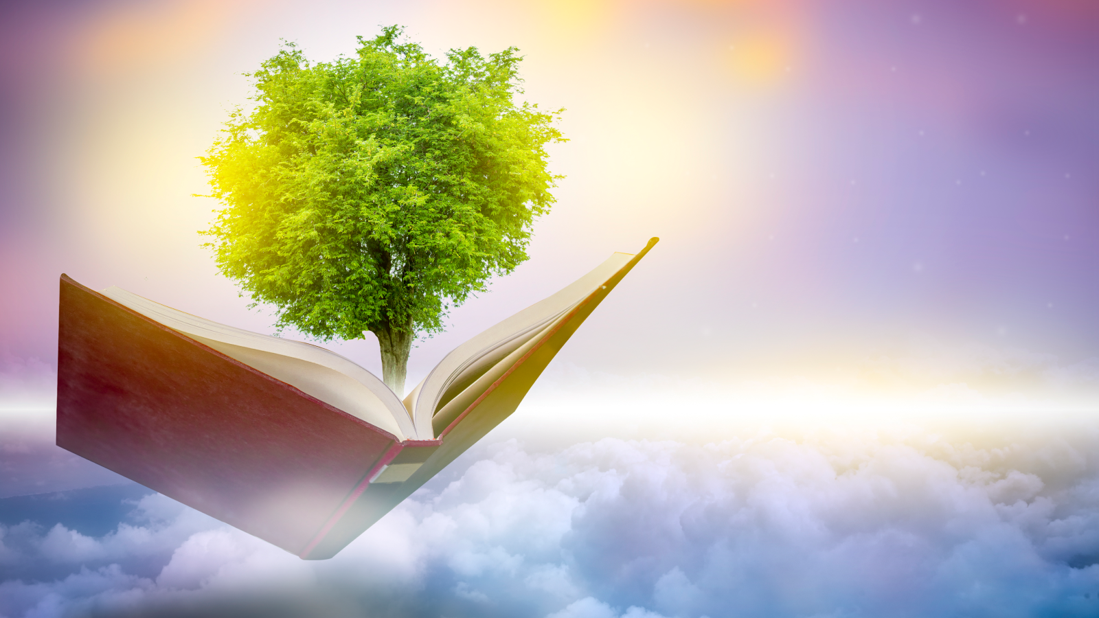 Tree coming out of book over the clouds