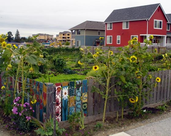 Highpoint organic garden.