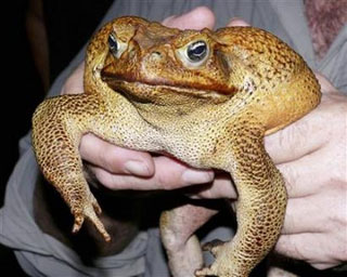 Photo: Courtesy of FrogWatch