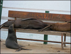 sea lions on a bench