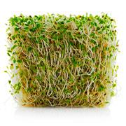 No GMO alfalfa for you