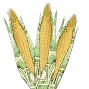 corn futures?