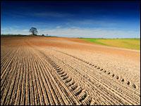 Vulnerable soil. Photo: iStockphoto