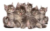 Kittens gone wild. Photo: iStockphoto