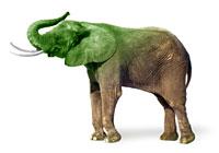 Greening the elephant