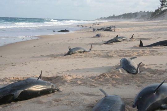 mozambique stranding 2006