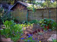 Backyard garden. Photo: Laura Gibb via Flickr