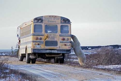 http://grist.org/wp-content/uploads/2008/08/polar_bear_tour_sc55.jpg