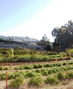 Alemany Farm