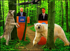 McCain and Obama on endangered species