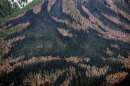 Canada's threatened forests
