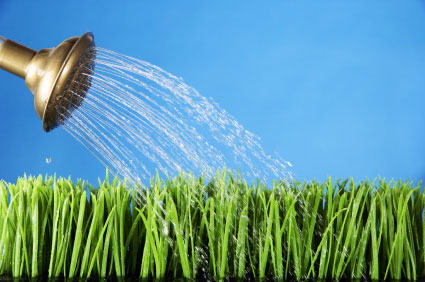 Watering can and green grass