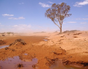 drought baren land