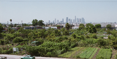 South Central Farm with L.A. skyline in background