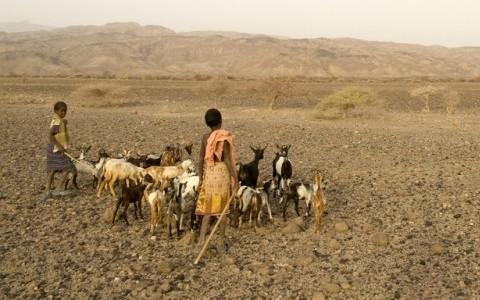 Children herding goats in desert.