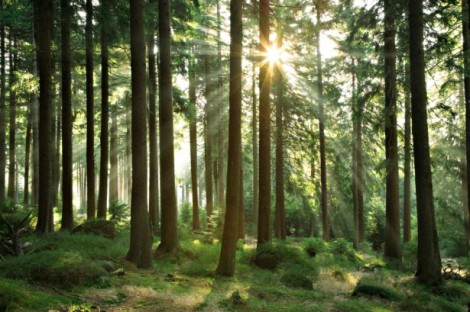 Image (1) forest.jpg for post 30515