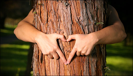 Arms hugging a tree