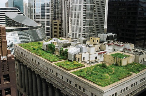 Green roof of Chicago's city hall
