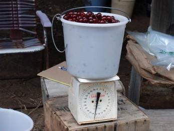 cherry bucket