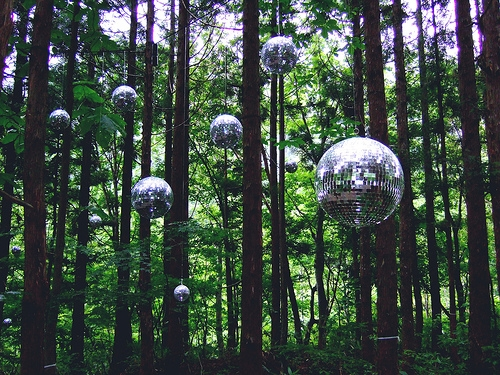 Disco forest.