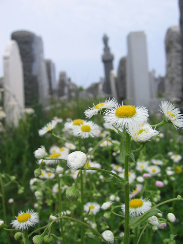 daisies and headstones