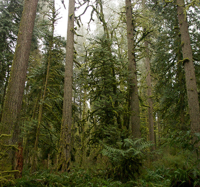 Oregon forest