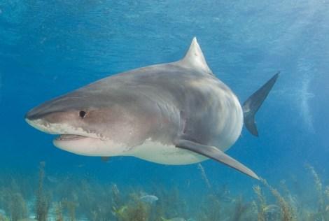 shark-flickr-WIlly_Volk.jpg