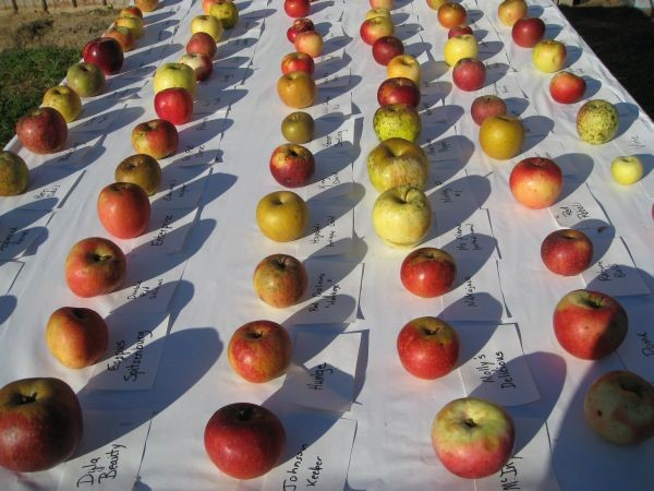 Table of apples