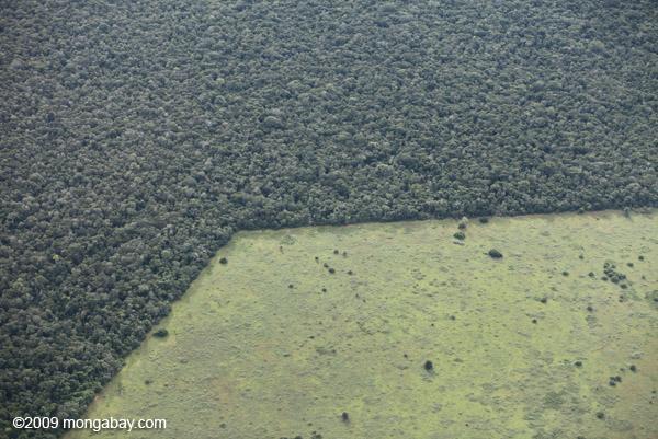 Geometric patterns of deforestation