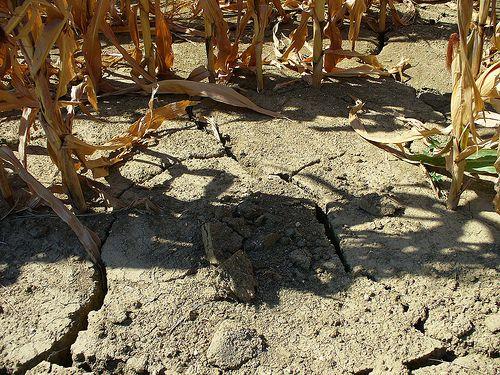 Desertification of farm land