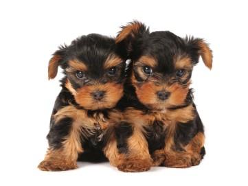 two stubborn pups
