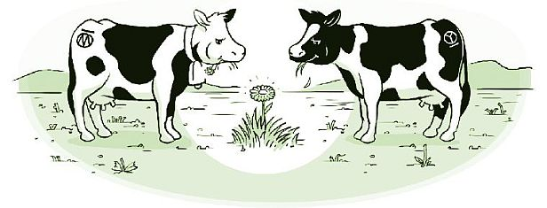 Cow cartoon.