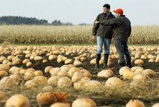 Paul Bakus in a ruined pumpkin patch.