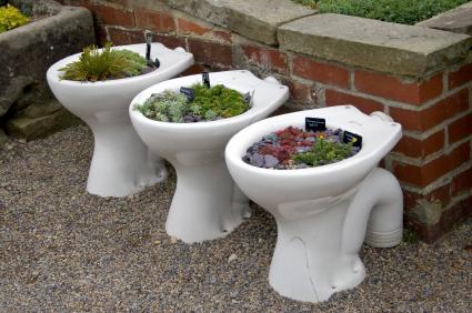 Toilet gardens.