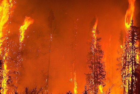 picture of Forest Fire Image