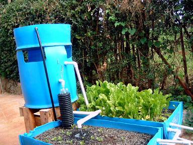 """Barrel-ponic"" gardening system"