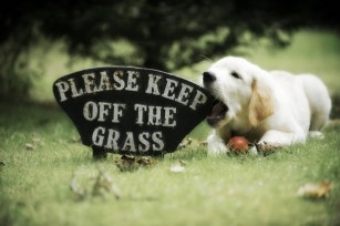 Puppy chewing on grass sign