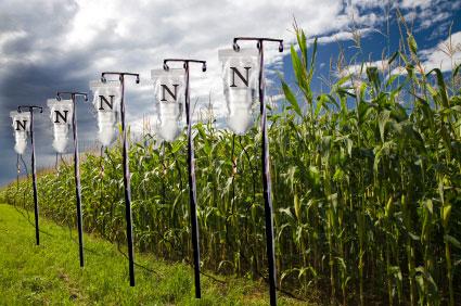 Nitrogen IVs and cornfield