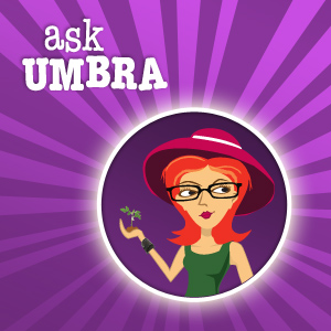 Ask Umbra