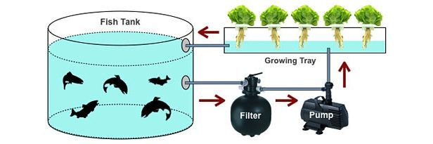 Aquaponics diagram.