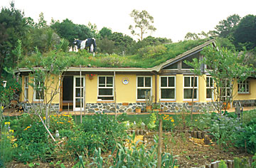 A cow on a green roof.