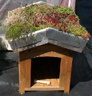 A dog house with a green roof.