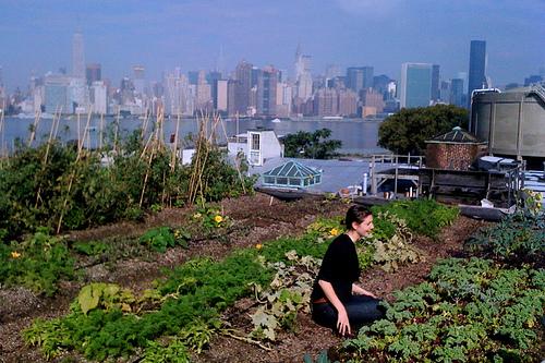 A rooftop farm.