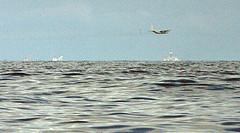 Plane Sprays Dispersant Over Oil Spill
