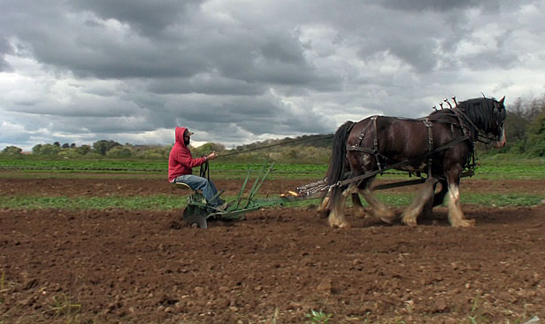 New Jersey horse farmer