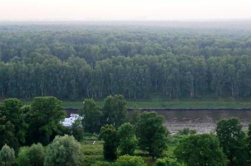 The Khimki forest.