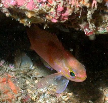 Fish under coral reef