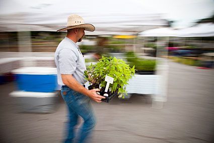 Man with plants at farmers market